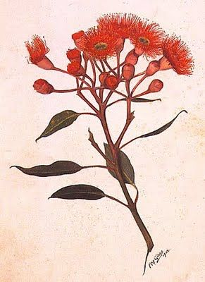 A painting of a flowering gum tree  by May Gibbs, 1902