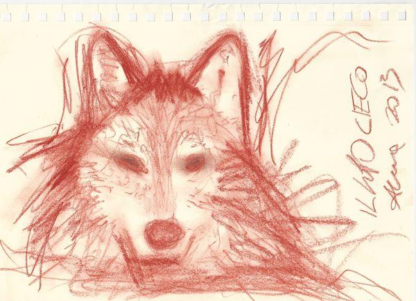 il lupo cieco
