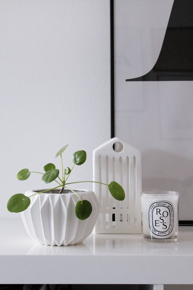 136 best images about pilea on pinterest deer art interiors and fast growing. Black Bedroom Furniture Sets. Home Design Ideas