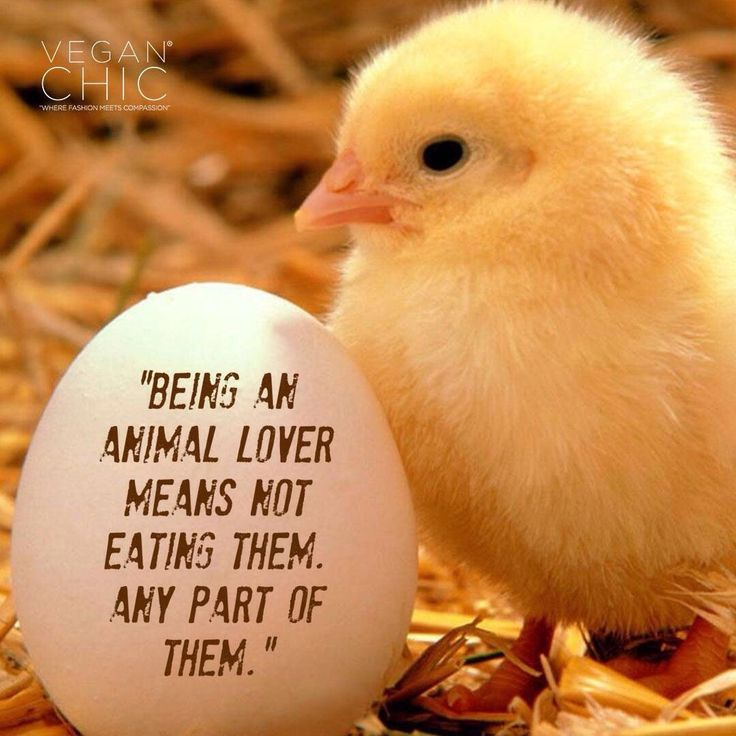 being an animal lover means not eating them -any part of them #vegan