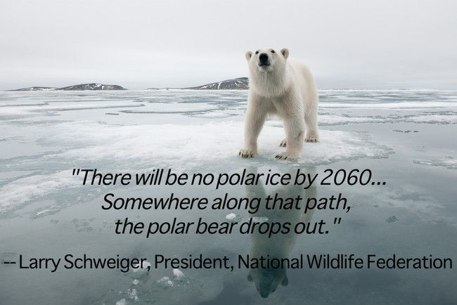 Facts You Need To Know About Polar Bears And Their Survival