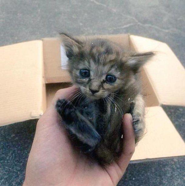 cest lhistoire trs touchante dun petit chaton qui est devenu