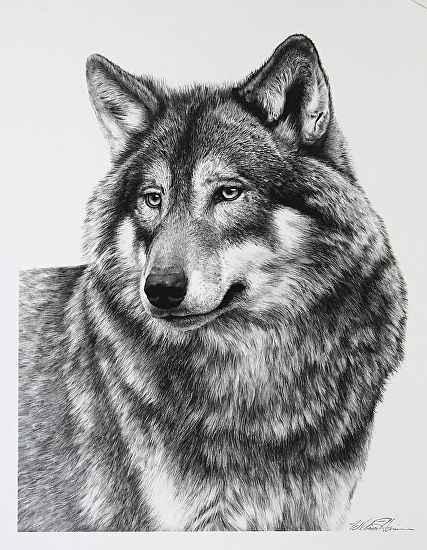 9 Best Images About CARBON PENCIL DRAWING On Pinterest