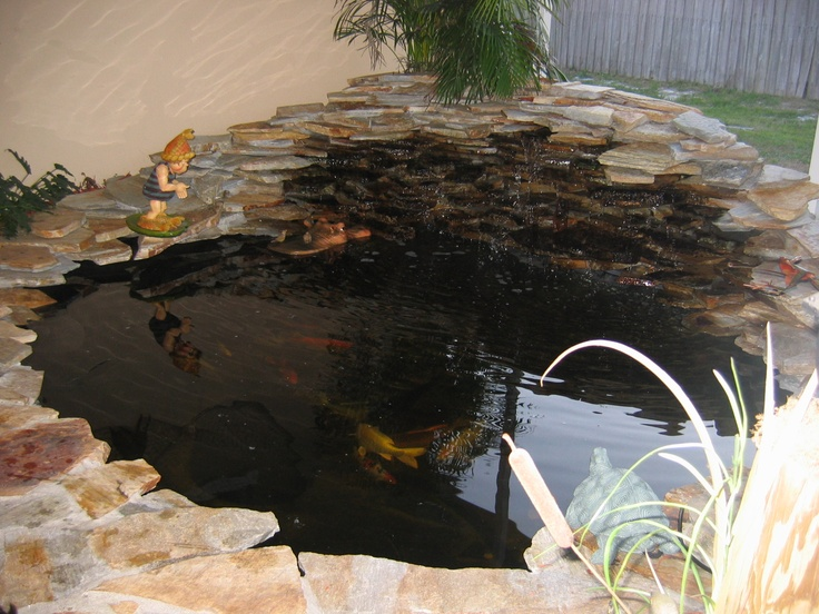 1000 images about coy ponds on pinterest pictures of for Coy fish pond maintenance