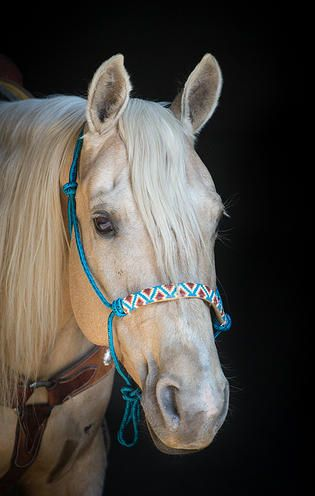 Beaded Rope Halter www.bustedkbeadwork.com. 6 DAYS TO LIVE 4 SEPT 2015 RODNEY (07302015M-D01) located in Delano, CA. ADOPT DONT BUY.. STOP GASSING..STOP BREEDING 4 PROFIT @nostalgicnora SAVE ANY LIFE