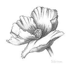 10 best images about tekeningen bloemen on the