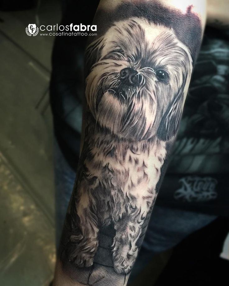 Shih Tzu Hair Pictures to Pin on Pinterest - TattoosKid