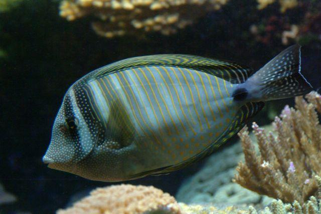 Zdj�cia: Akwarium morskie w Agde, Langwedocja, ryba , FRANCJA