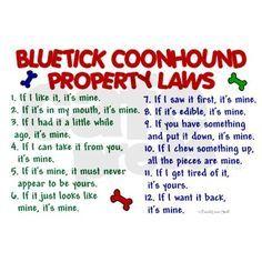 bluetick coonhound funny pics - Google Search