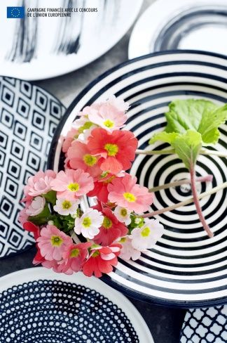 Coral Pink and trendy...Primula