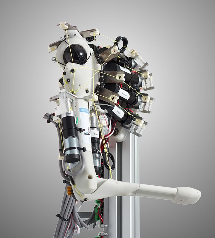 anthrob | anthropomorphic tendon driven robot arm. | robots, Skeleton