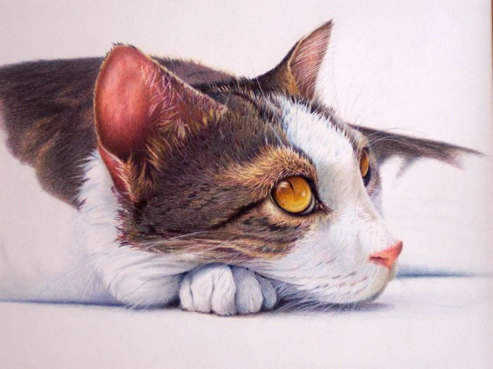 Coloured pencil ... W. Taylor ~ Enjoy everything about #cats - Get the latest Ozzi Cat Magazine! Click here >> http://OzziCat.com.au/issues