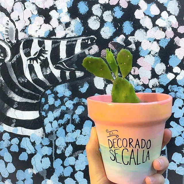 Best regalo ever MIAMOR!  Maceta $150 Maceta + suculenta $250  Consultas por inbox - CABA  #Succulove #succulent #succulentsofinstagram #succulentcity #CactusLove #cactus #CactusLover  #cactusofinstagram #cactusclub #cactusobsession #succulentobsession