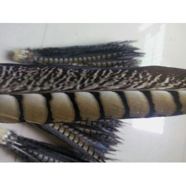 Перья фазана Lady Amherst 35-40 см. От 10 шт.