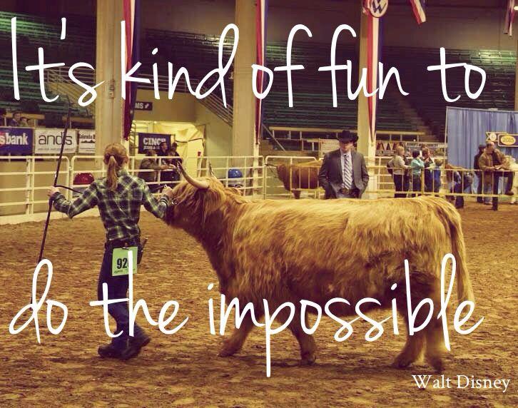 Gotta love showing cattle