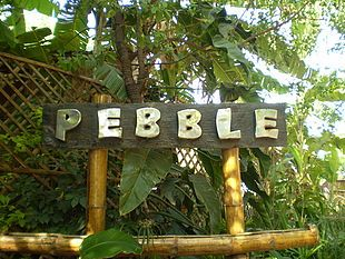 Pebble-Nightlife place at Palace Road, Bangalore http://goo.gl/wdwwI Pebble Bangalore-Set in a heavy bushy theme, this night club has the setup for great music, coursing spirits and the rich greens with rough outside to please the mind-set.
