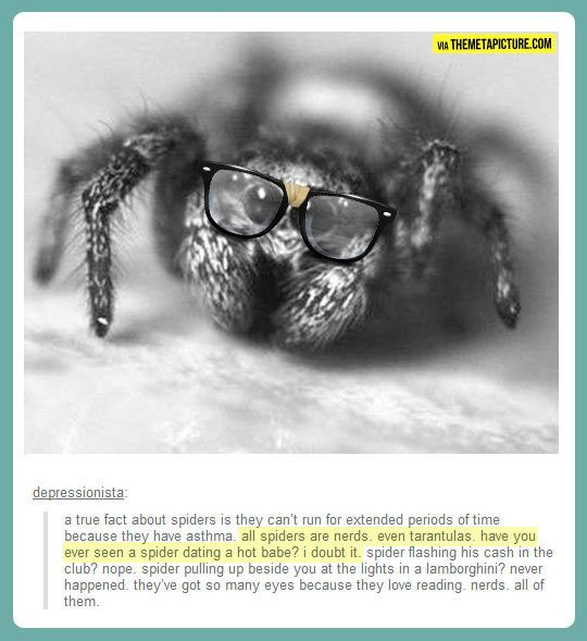 Something you didn't know about spiders… I'm sorry but I actually love spiders. Seriously. Look at that thing he's super cute.