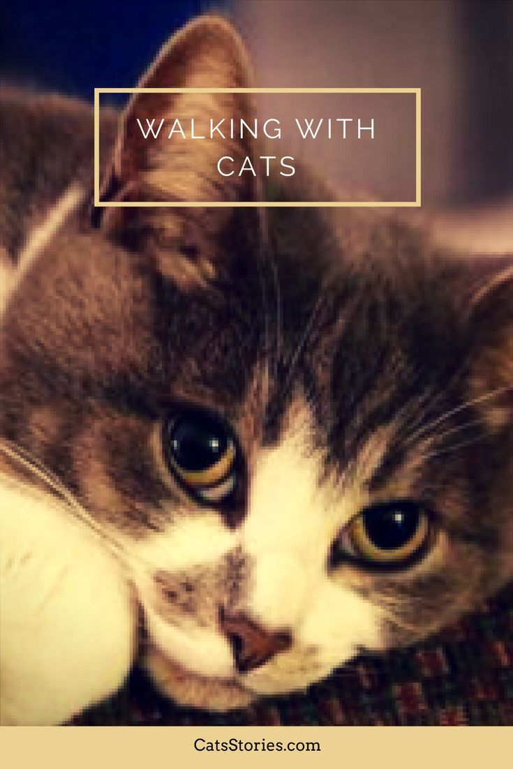 """They say dogs have masters, but cats have servants . . . "" 