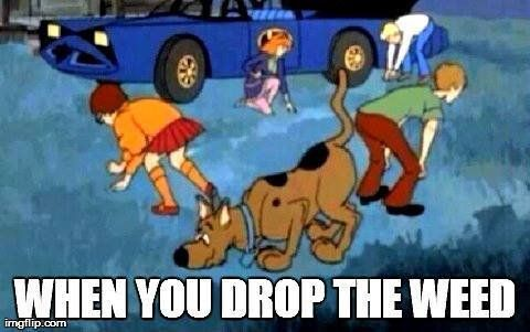 Pin for Later: 20 Stoner Memes Perfect For 4/20  We know the truth about Shaggy.
