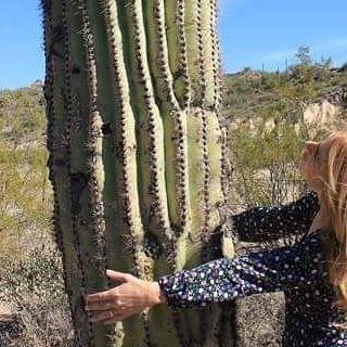 I love Saguaro  #kialacamper #kialaontheroad #memories #takemeback #throwback  #saguarocactus #arizona #saguaro #cactus #desert #az #sonorandesert #desertlife #igsouthwest #tucson #ilovearizona #ilovethedesert #nature #ig_countryside #succulent #plants