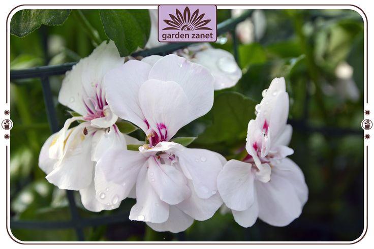 Oltre 1000 idee su piante da balcone su pinterest piante for Piante da frutto che resistono al freddo