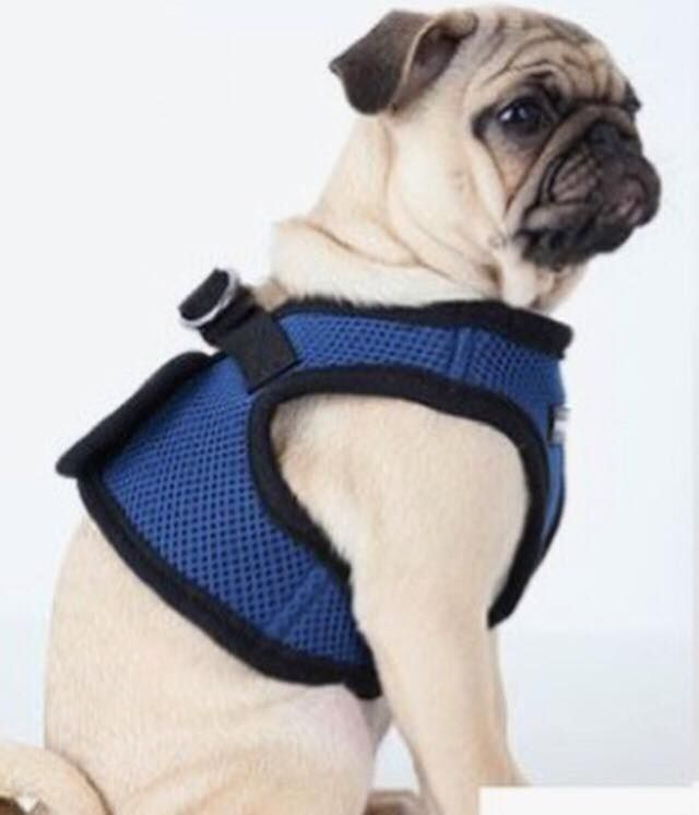Puppia Navy Step In Jacket Harness Available At Www Ilovepugs Co