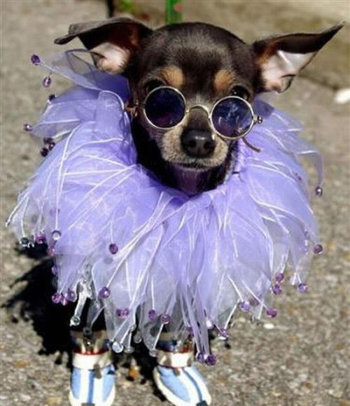 Animals with sunglasses - photo#11