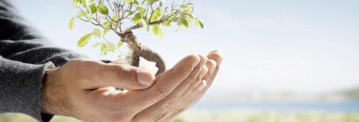 La naturopatía mas que una profesión es un modo de vida saludable. Estos métodos no son agresivos para el cuerpo y pueden complementar a la medicina tradicional.