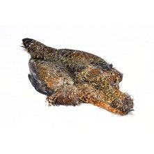 Premium Grouse Complete Skin Fly Tying Feathers