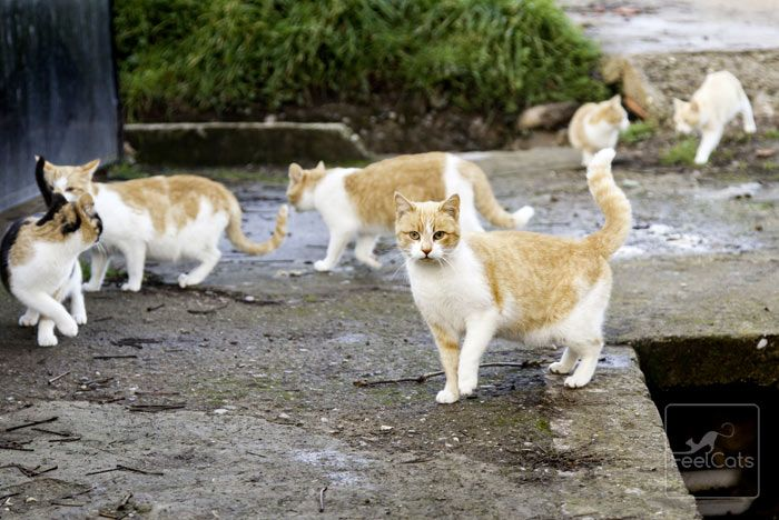 Pin En Inmunodeficiencia Felina