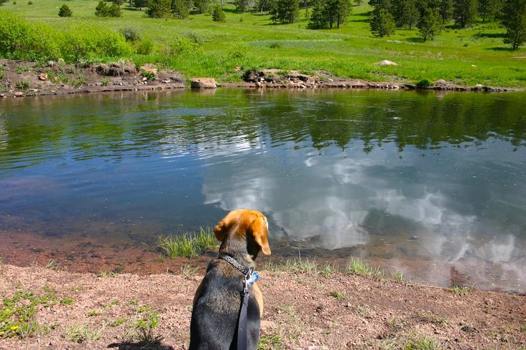 There are plenty of worthwhile places to take your dog in Colorado Springs, and here are a handful of the best options, from open meadows to gurgling streams.