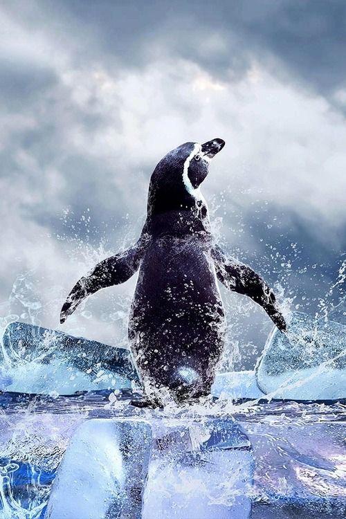 .: Awesome Animal, Beautiful Picture, Splish Splash, Awesome Pics, Beautiful Animal, Animal Photography, Africans Penguins, Happy Feet, Amazing Animal