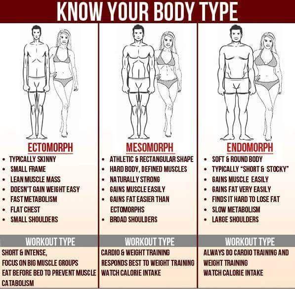 Diät für den endomorphen Muskelaufbau