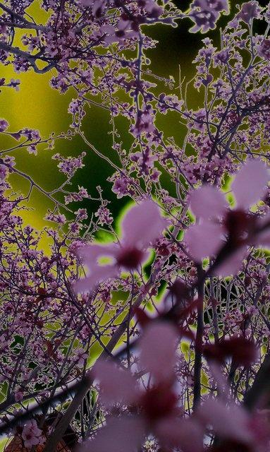 04.20.2012 - Backyard by Kurt von Schleicher