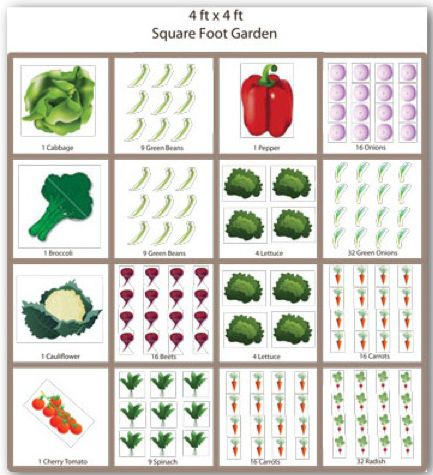 17 best images about planting guide on pinterest gardens for Best garden layout planner