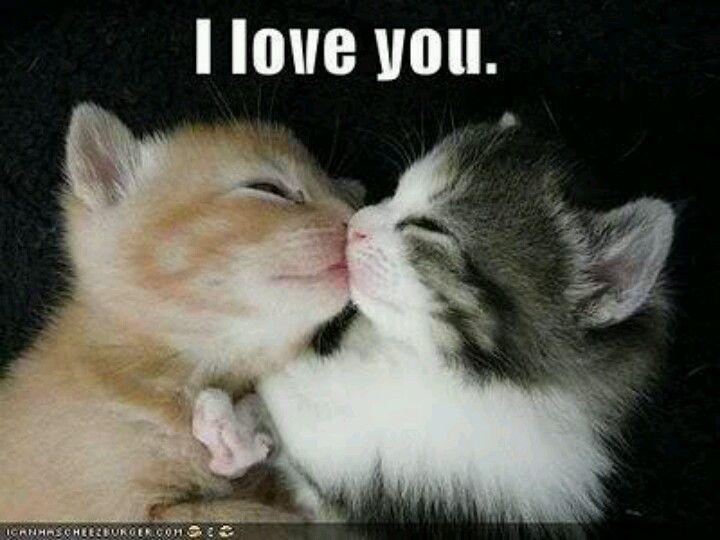 I Love You | Cute animals | Pinterest