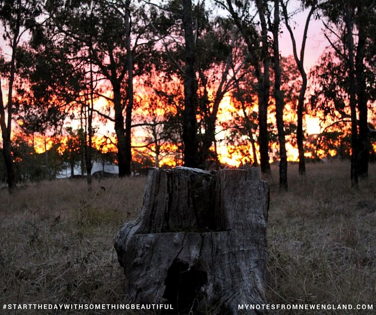 My favourite stump with a backdrop of a beautiful but brief sunrise #startthedaywithsomethingbeautiful
