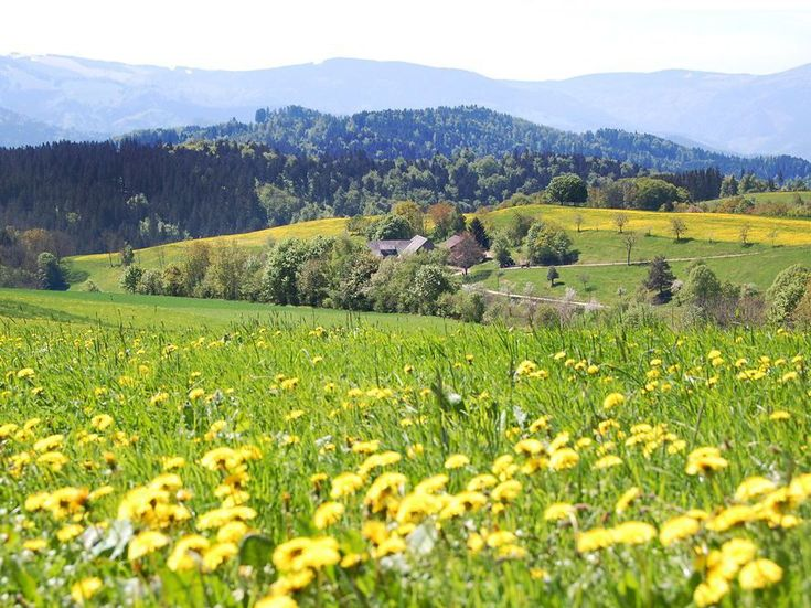 Fall in love with the Black Forest