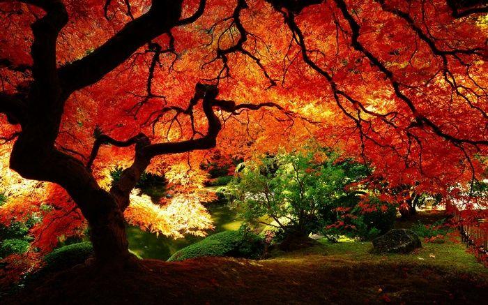 Nature Red Leaves Red Wallpaper Landscape Wallpaper Scenery Wallpaper Desktop Wallpaper Fall