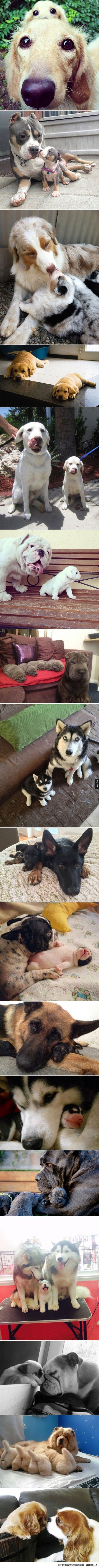dorosłe psy i ich dzieci
