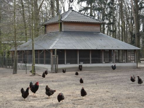 Hooimijt met kippenrennen - Houtstaal, kwalitatief hoogwaardig!
