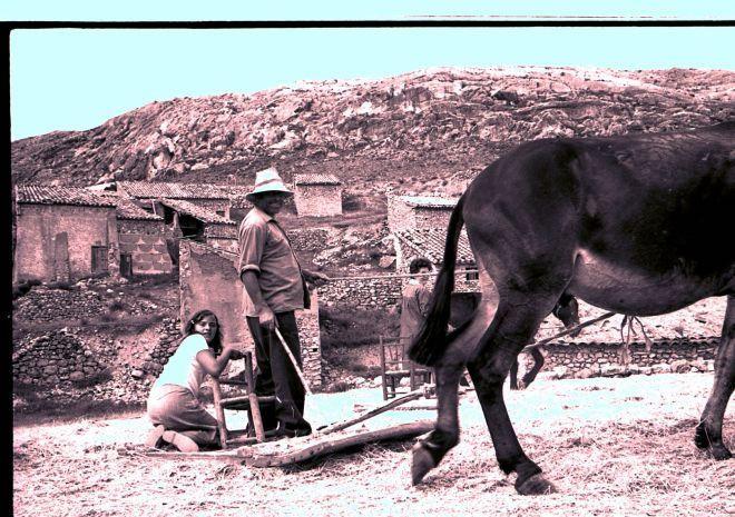 trilla en una era de La Hoz de la Vieja (Teruel) España