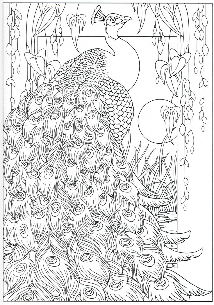 Peacock coloring page 16/31