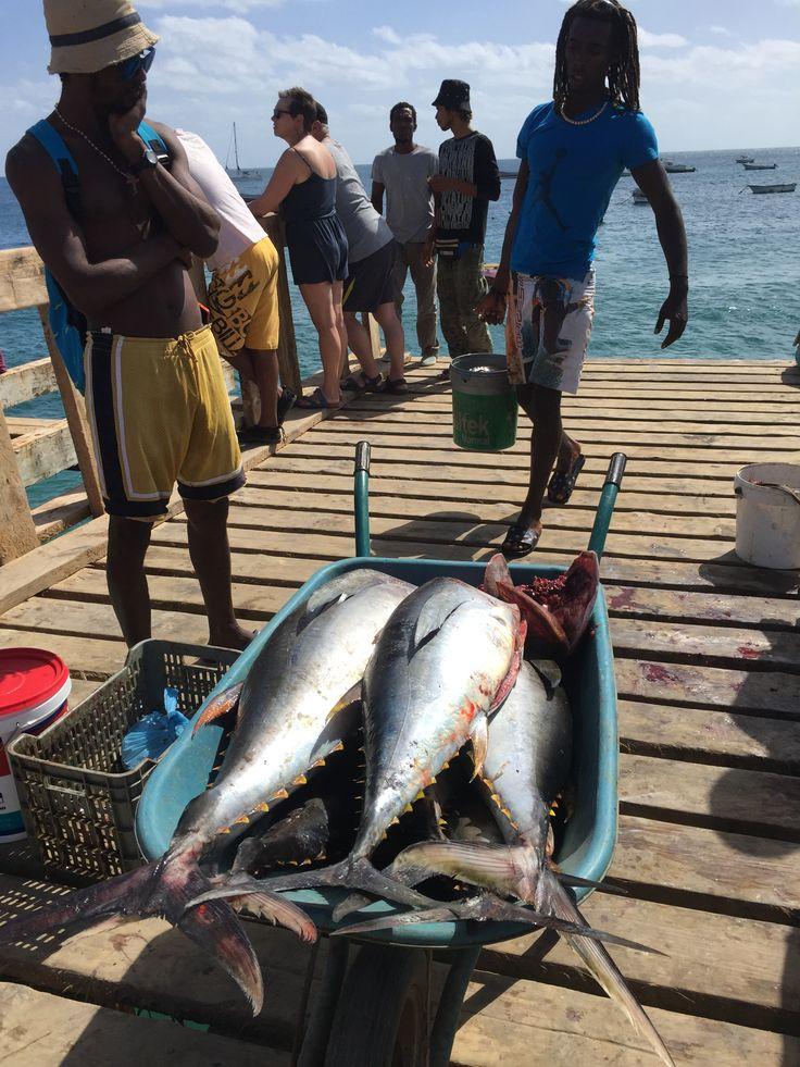 Fishermen back in Santa Maria