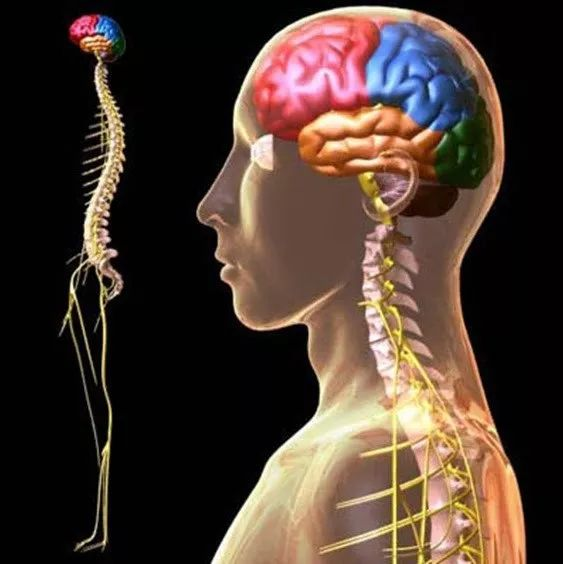 Система человека с точки зрения остеопатии