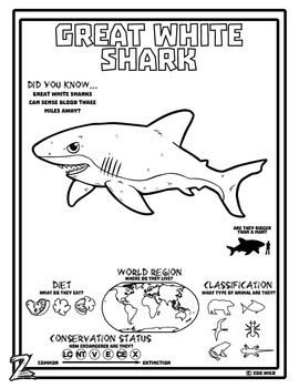 A Great White Shark from the world's oceans.Do you have zoo wild kids?Infuse wild animal learning with geography, biology and wildlife conservation designed for kids with a Zoo Wild activity page. Perfect for homeschool or as a station in class!If you feel Zoo Wild: Visit our Store for discounted bundles! $0.50