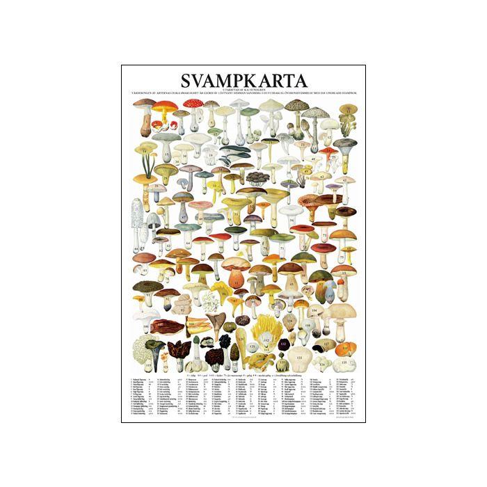 Affisch – Svampkarta | Svamp.se