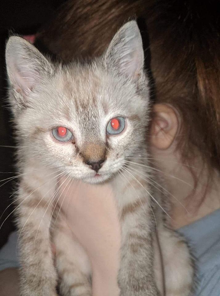 Help Us Name This Kitten Cats Kitten Cat Names