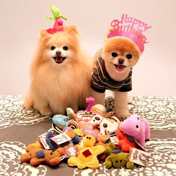 boo the dog birthday