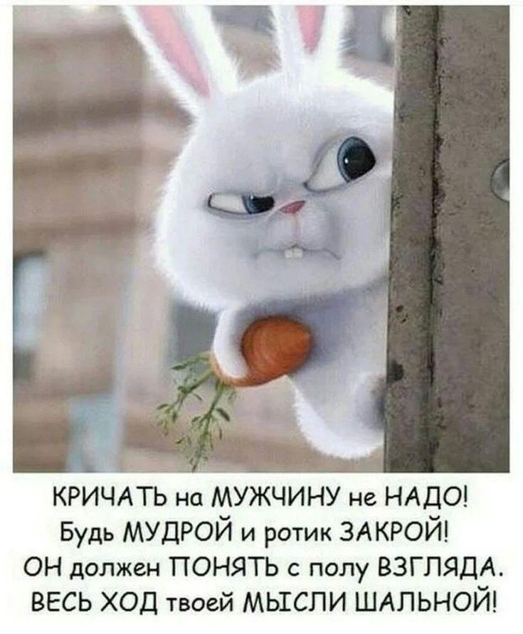 Падающих, прикольные картинки зайцев с надписями